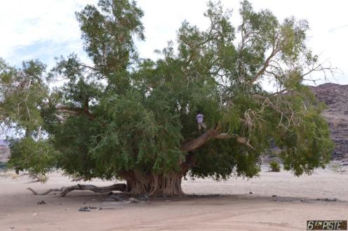 Bel arbre rivière Orange